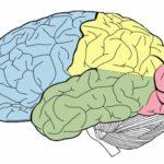 Cerebro - New
