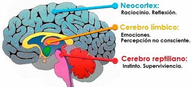 Cerebro - Partes 1