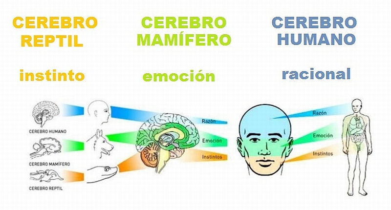 Cerebro - Partes 2