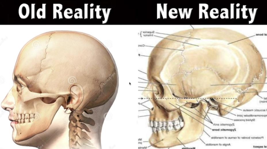 Cráneo humano - Old-New Reality