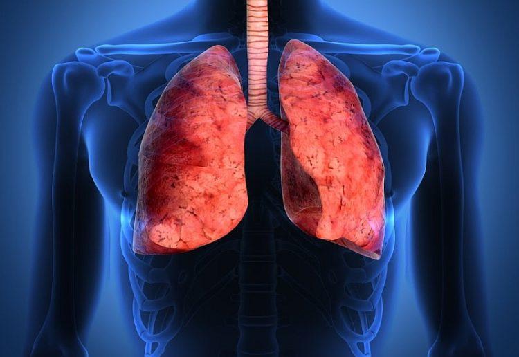Pulmones - New 2
